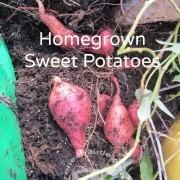 sweetpotatoes